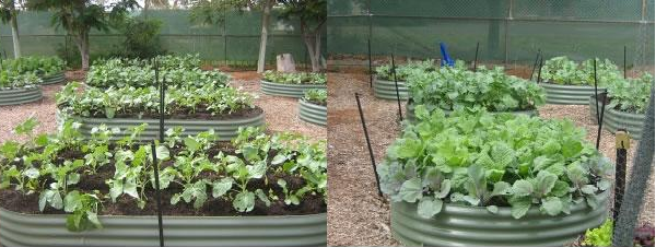 Survival and Sustainable Garden to Table | FBWorld.com