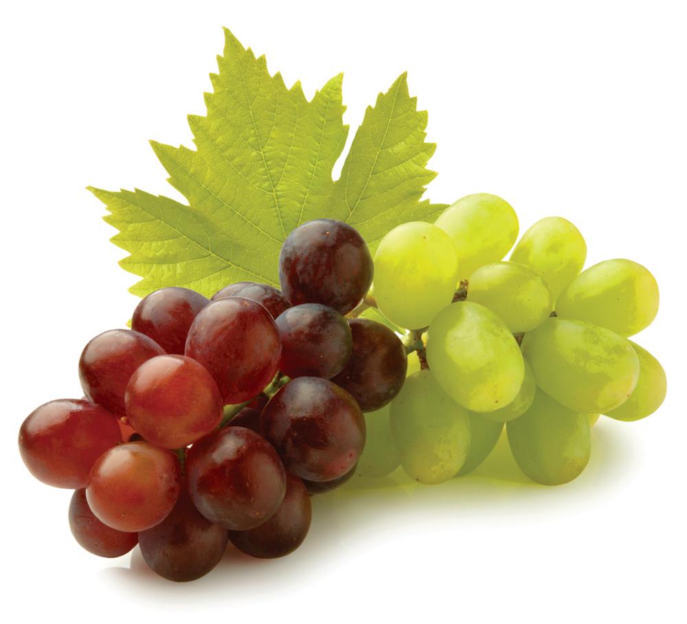 Learning About Santa Barbara Wines